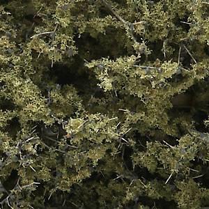 Bilde av Løvtrær og busker oliven